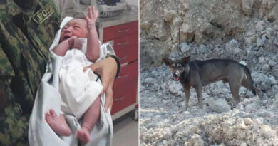 A Christmas Miracle: Stray Dog Saves An Abandoned Baby In Christmas Eve